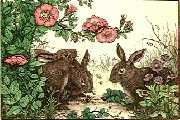 Rabbits and Roses